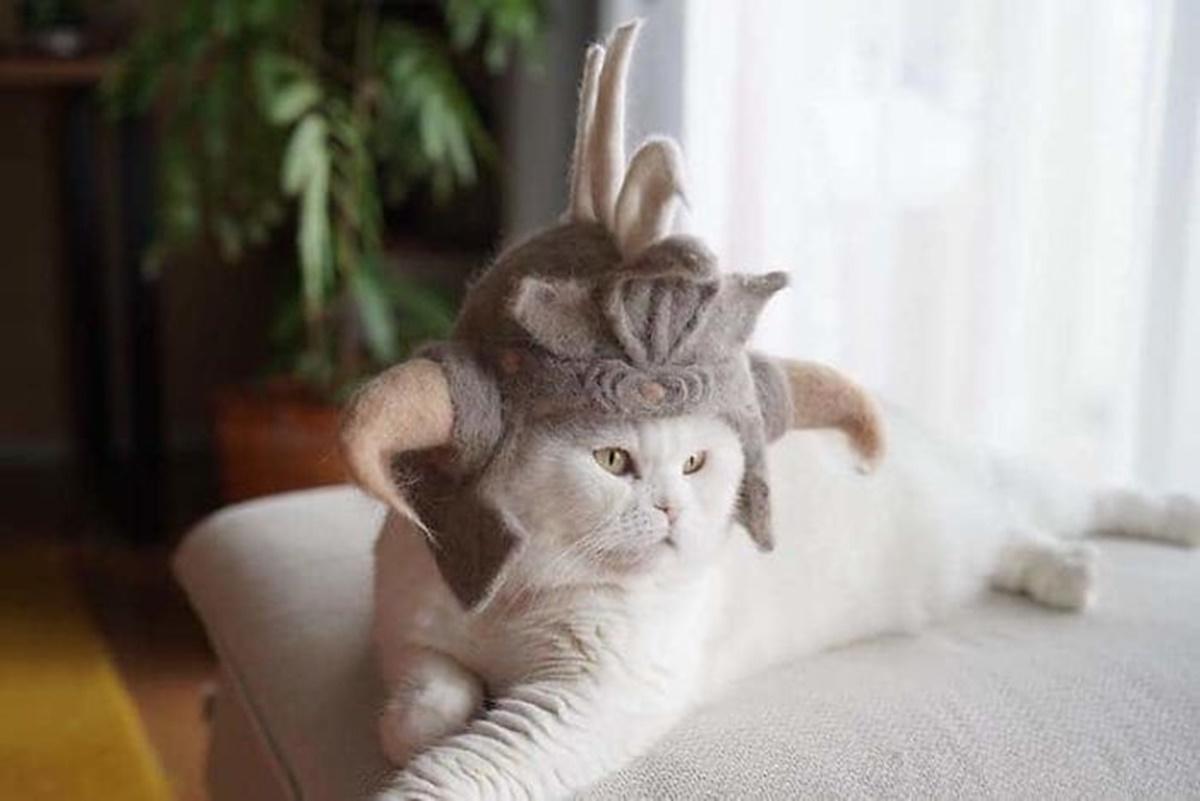 gatto samurai