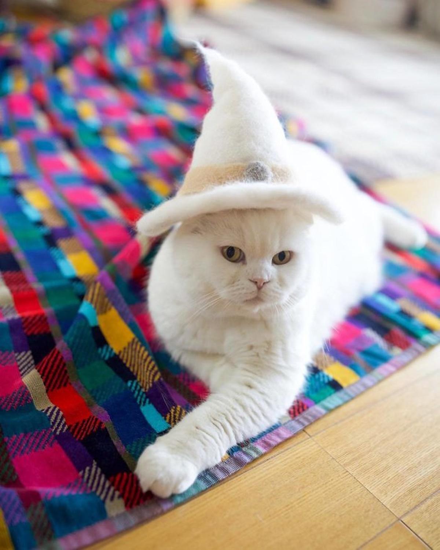 gatto mago