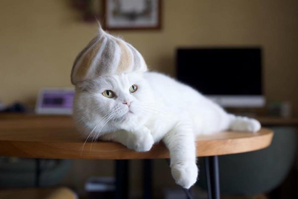gatto sciamano