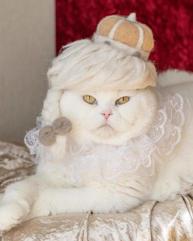 gatta principessa