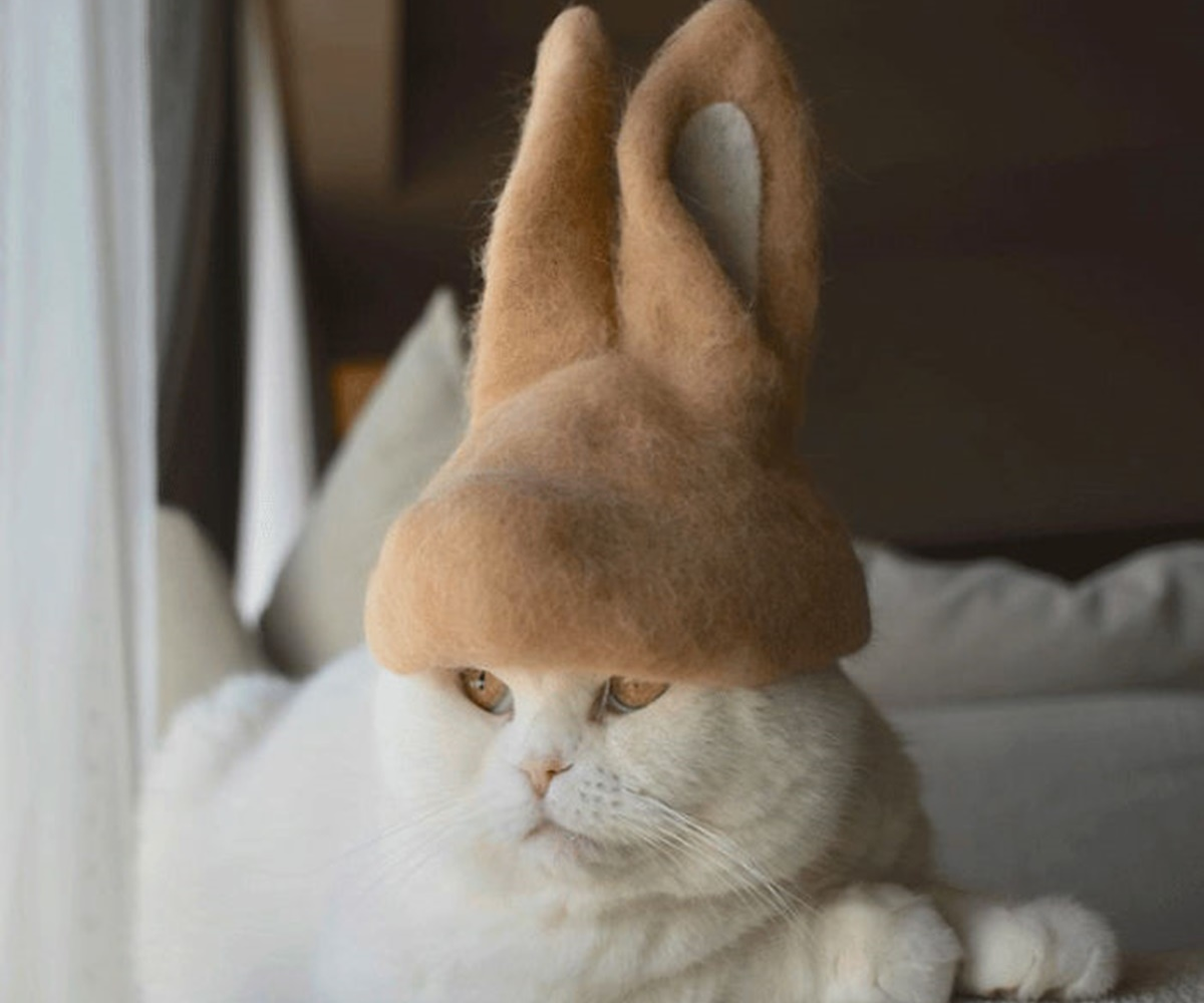 gatto coniglietto