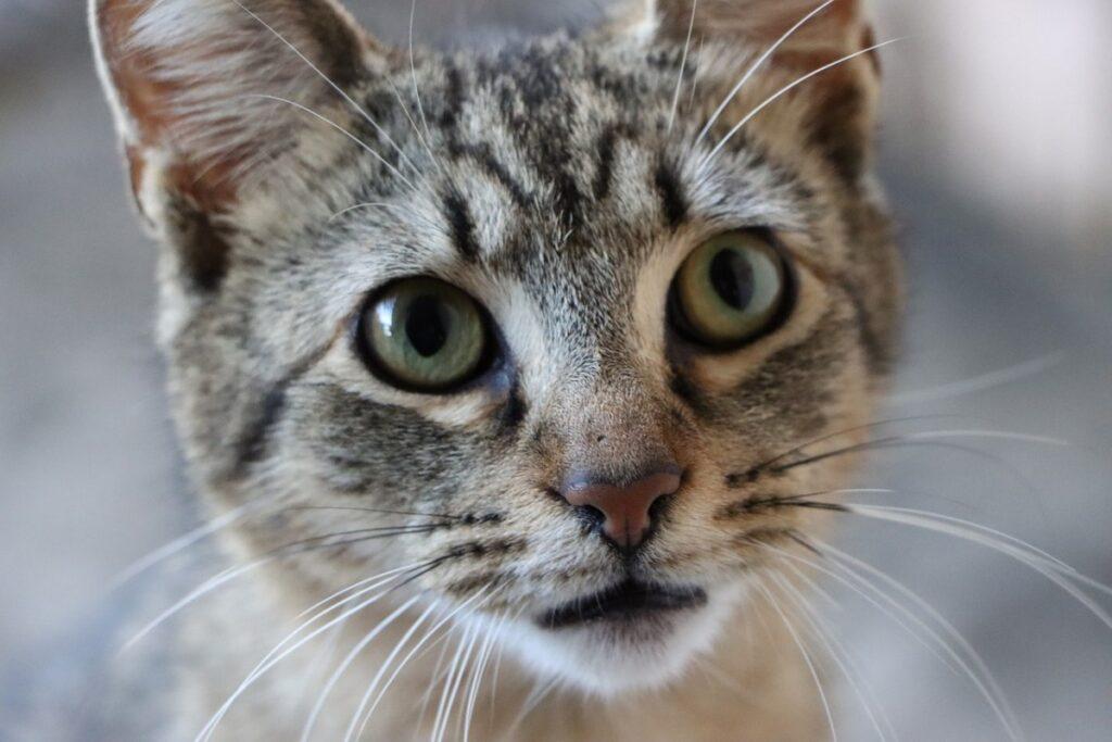 gatto con l'espressione perplessa