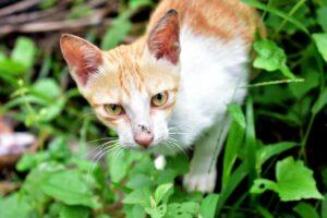 gatto arancione in giardino
