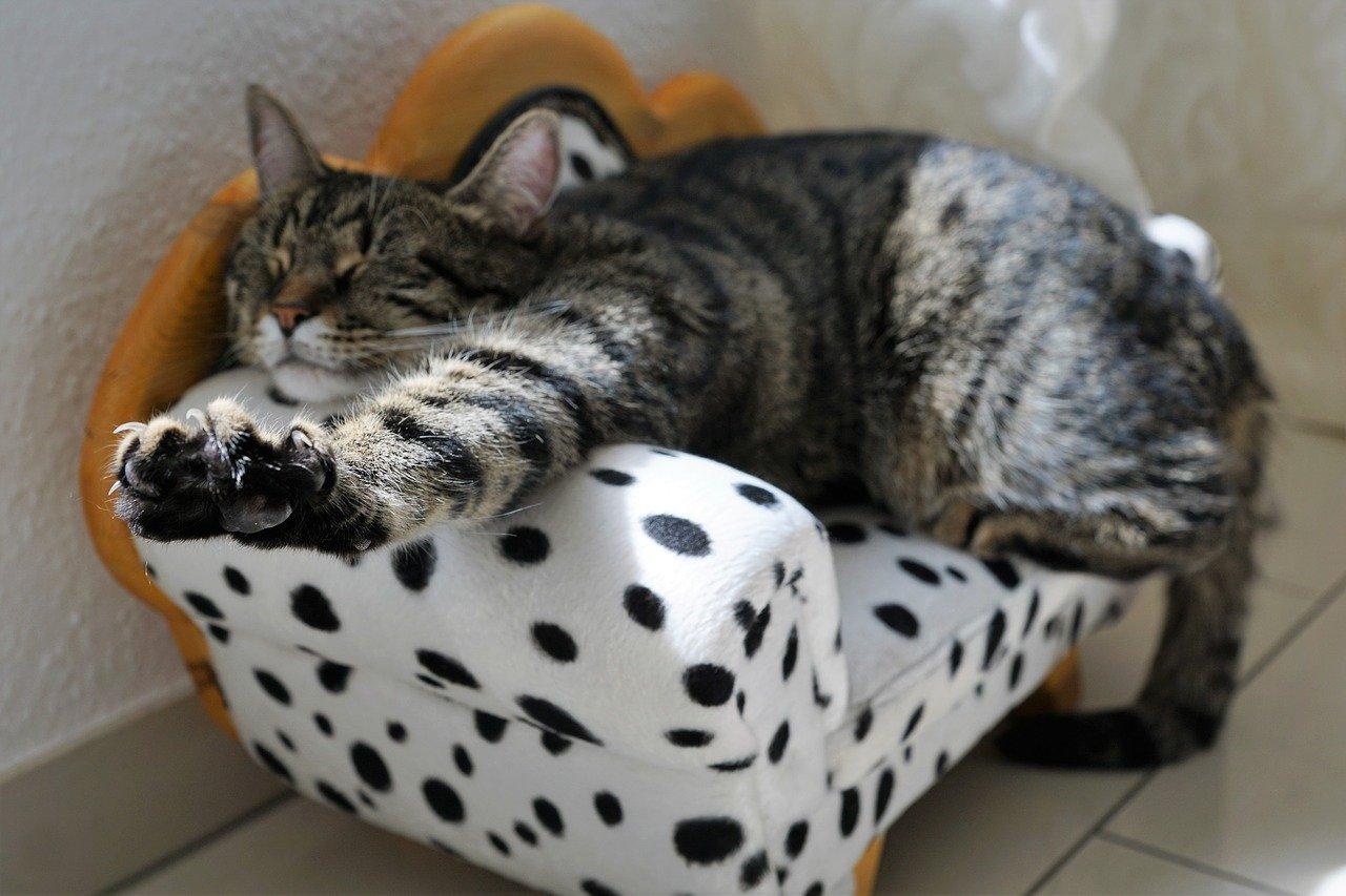 gatto si stiracchia sulla poltrona