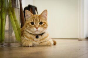 gatto sguardo furbetto