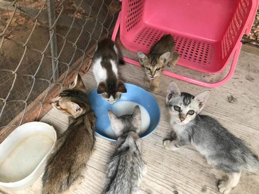 Gattini randagi salvati