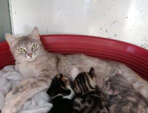 mamma gatta con cuccioli