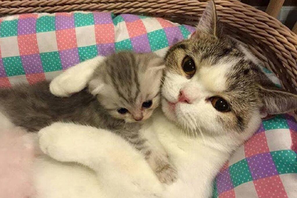 gatta stringe a sé il suo cucciolo