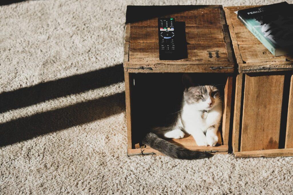 gatto nascosto nel box