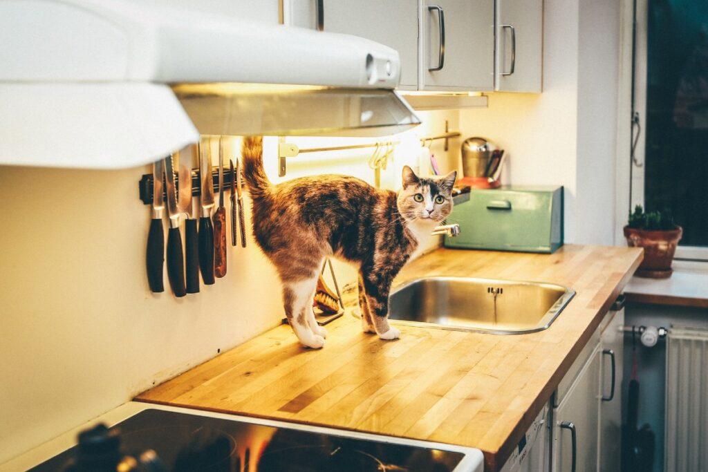 gattino marca territorio