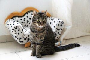 gatto sguardo rilassato