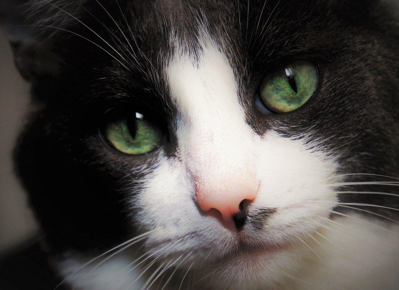 gatto occhi teneri