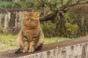 gatto osserva dal muretto