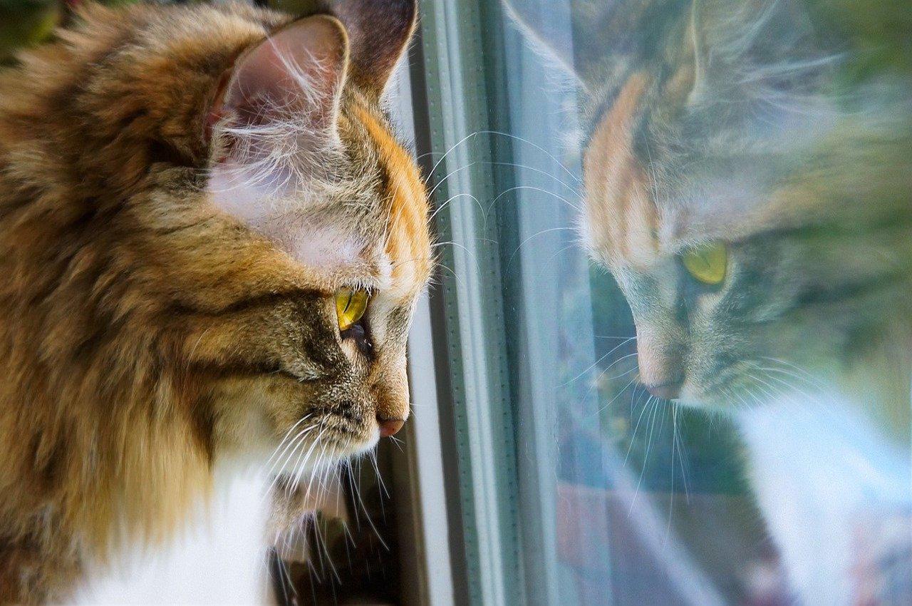 gatto guarda fuori dal vetro