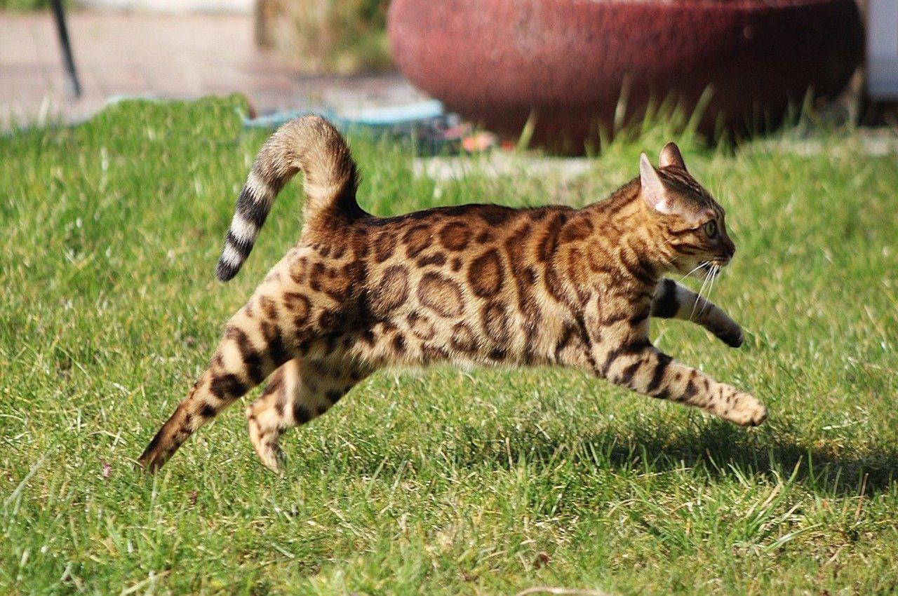 gatto corre sul prato