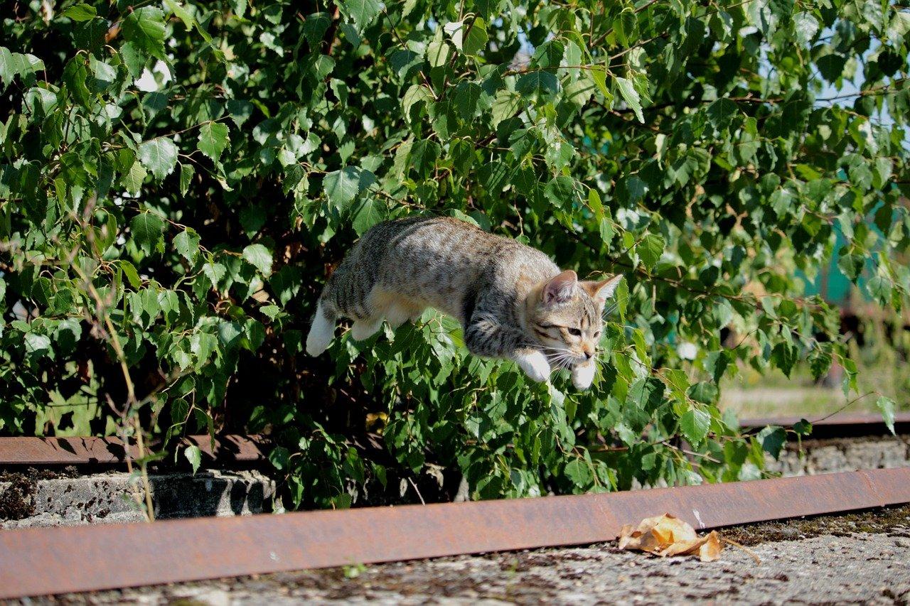 gatto fa un grande salto