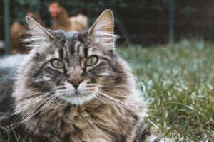 gattino vuole stare nell'erba in giardino
