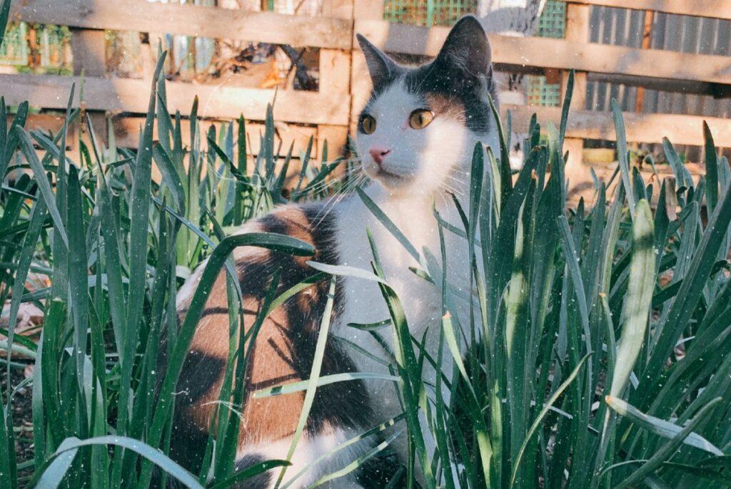 gattino tra i fili d'erba
