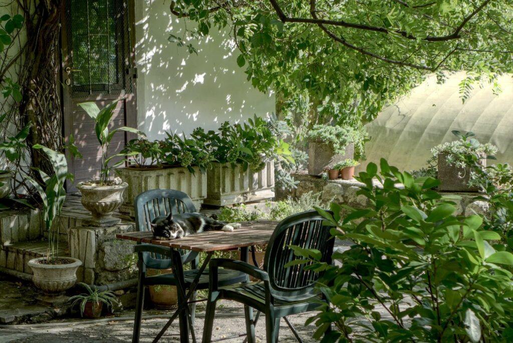 gatto sul tavolo del giardino