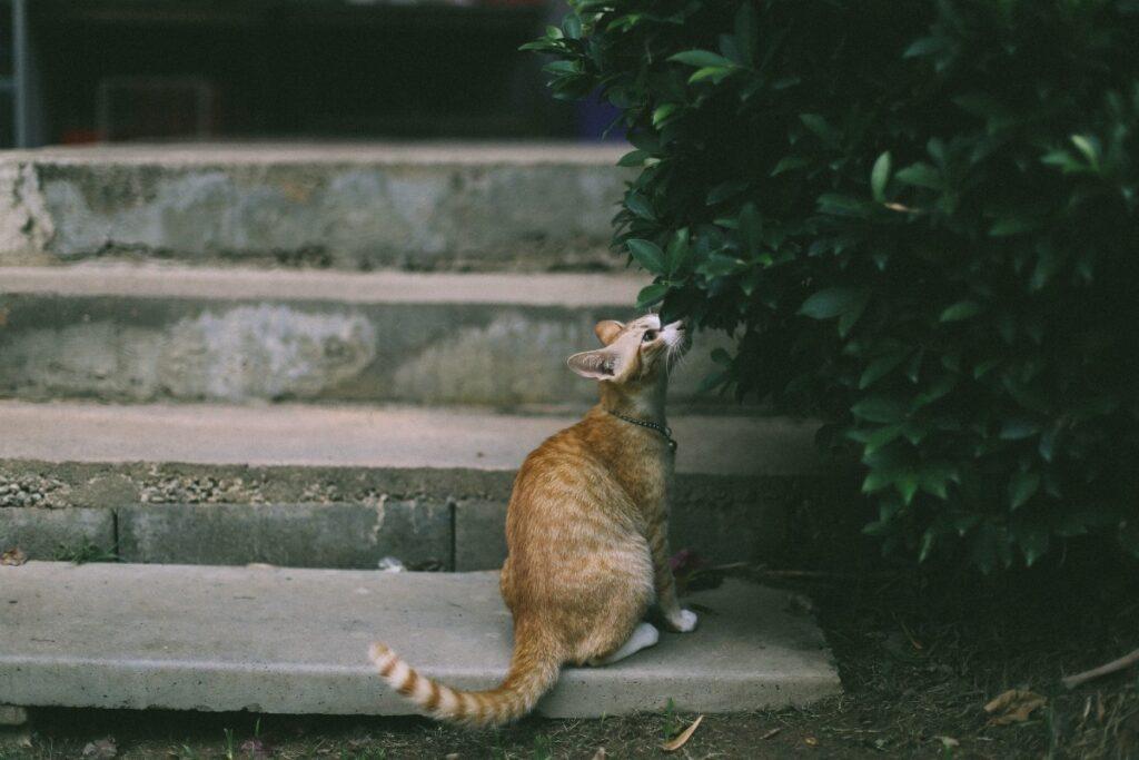 gattino sulle scale del giardino