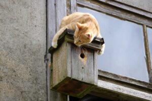 gatto rosso sopra voliera