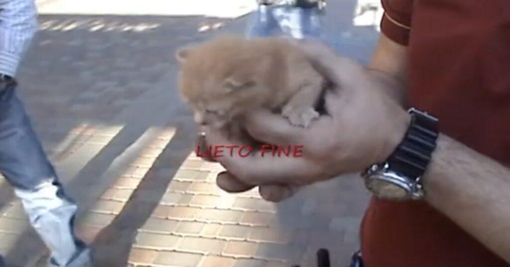 gattino caduto nel camino salvato