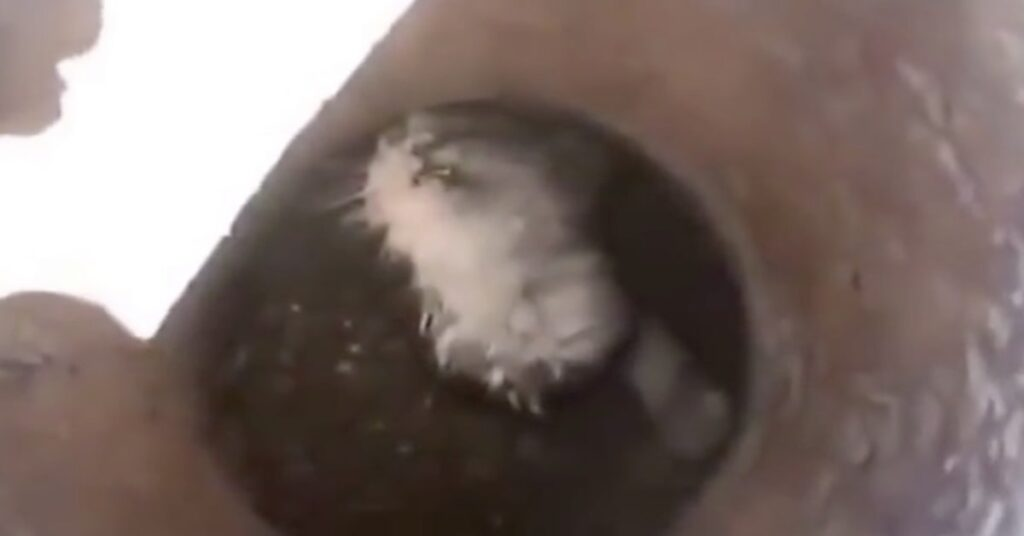 gatto in trappola in un tubo