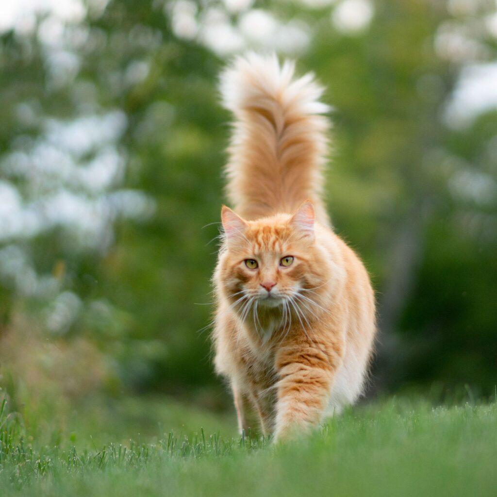 gatto arancione a strisce sull'erba