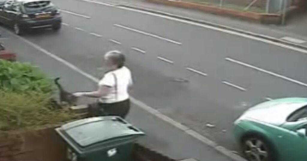 donna salva un micio gettato nell'immondizia