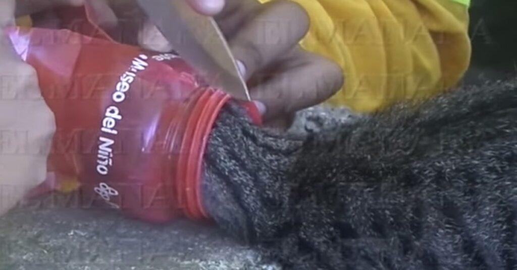 pompieri liberano un gatto tagliando il contenitore nel quale è incastrato