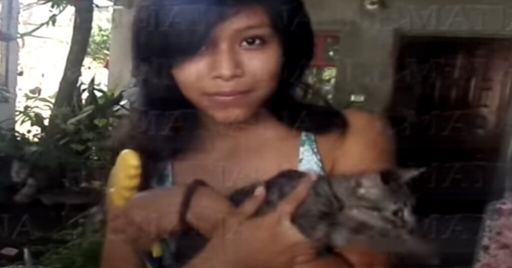 gattino grigio in braccio alla padrona