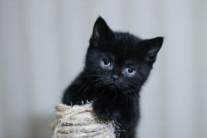 gattino nero appena nato