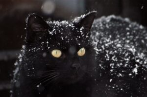 gatto nero sulla neve