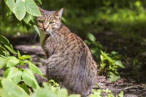 gatto di spalle con testa girata