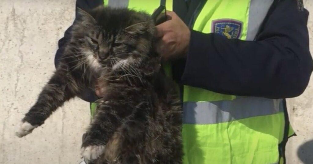 gatto in braccio al poliziotto che lo ha salvato