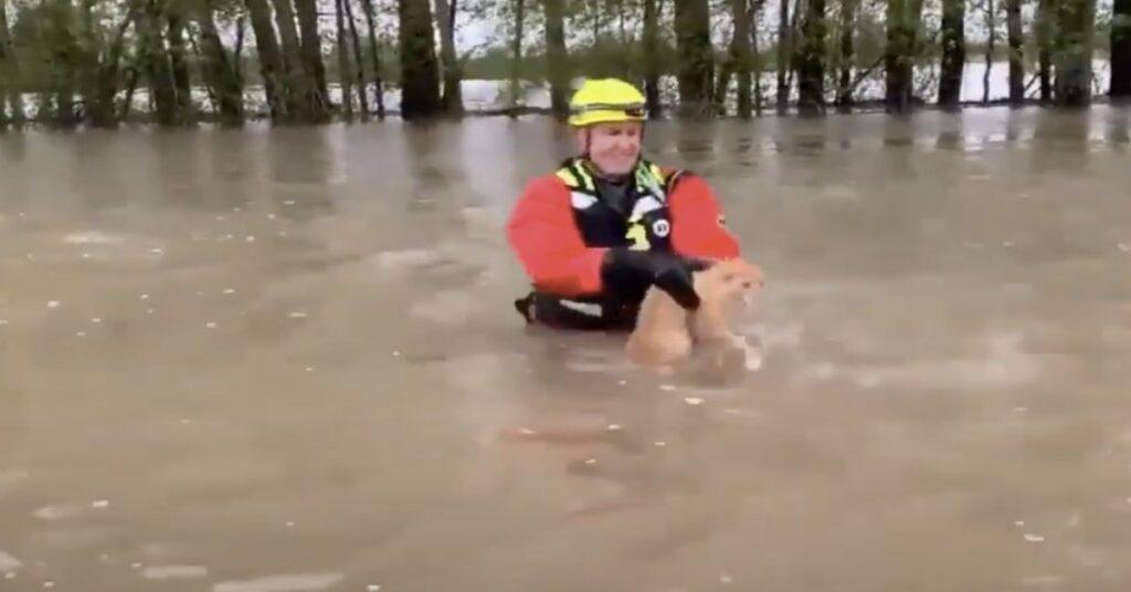 pompiere americano salva un gatto in acqua