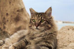gatto grigio sugli scogli