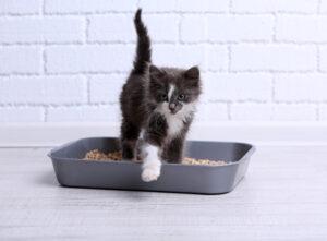 gattino esce dalla lettiera