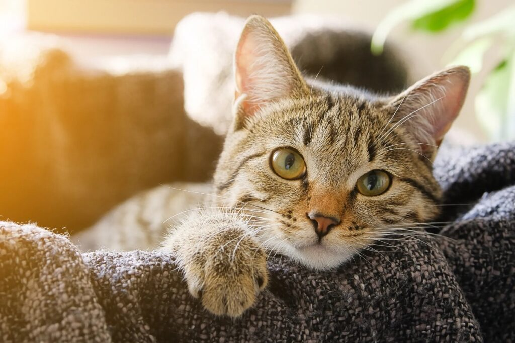 gatto si rilassa