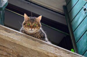 gatto grigio sul davanzale