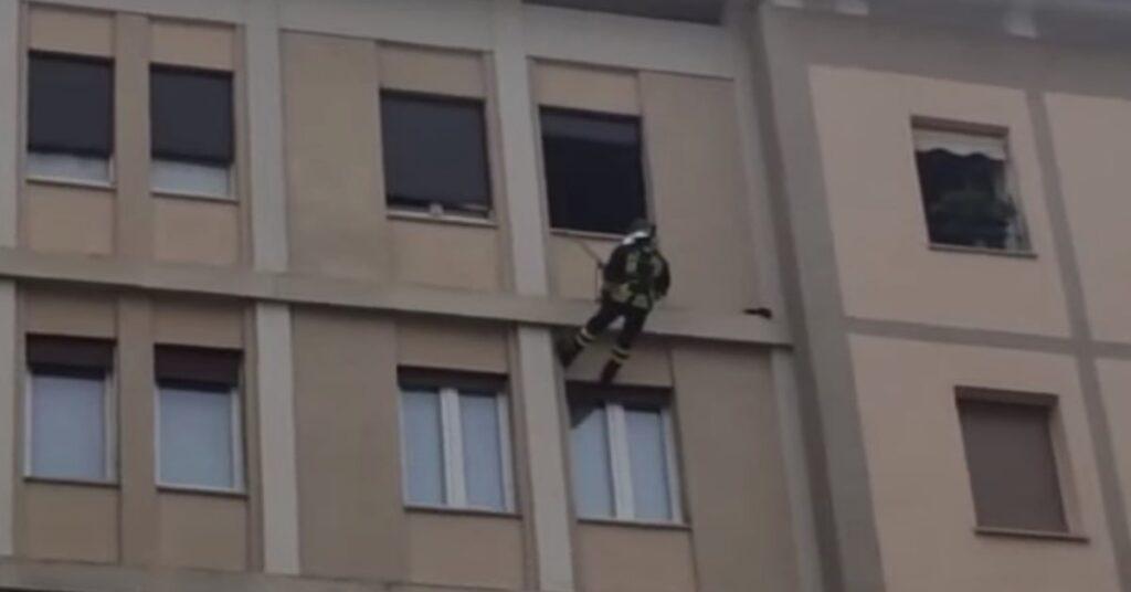 pompiere salva un gatto