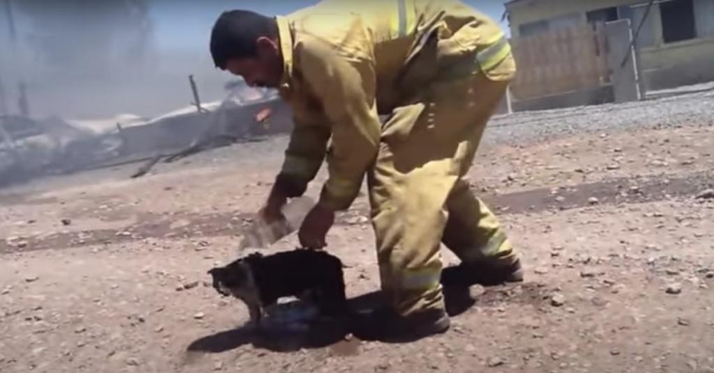 un pompiere rinfresca un gatto bruciato con dell'acqua