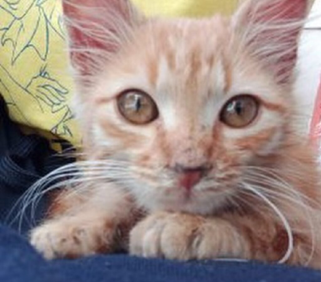 gatto pesca occhi gialli spenti