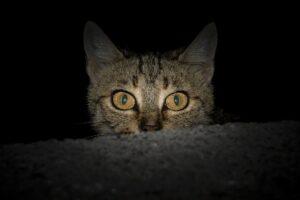 testa di gatto che sporge