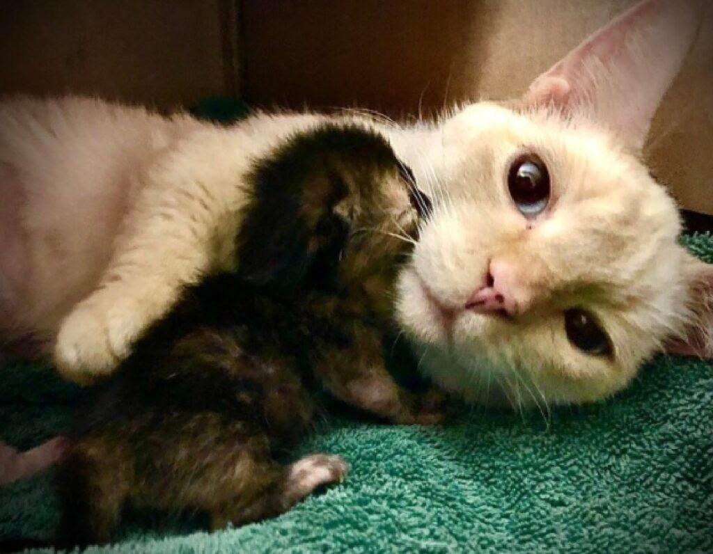 mamma gatta rossa gattino nero