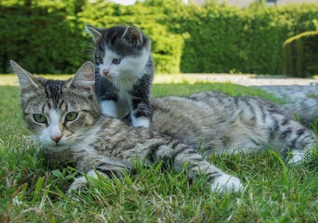 gatti giocano famiglia giardino