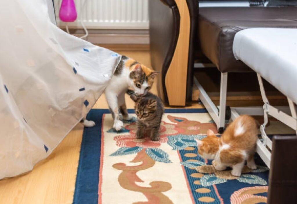 mamma gatta insegna casa piccoletti