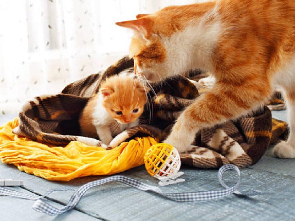 mamma gatto insegna piccolo a giocare