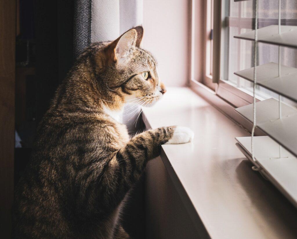 micio finestra guarda