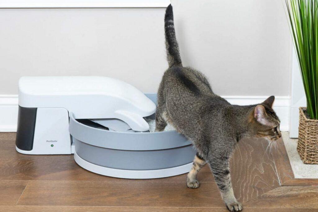gatto usa la lettiera